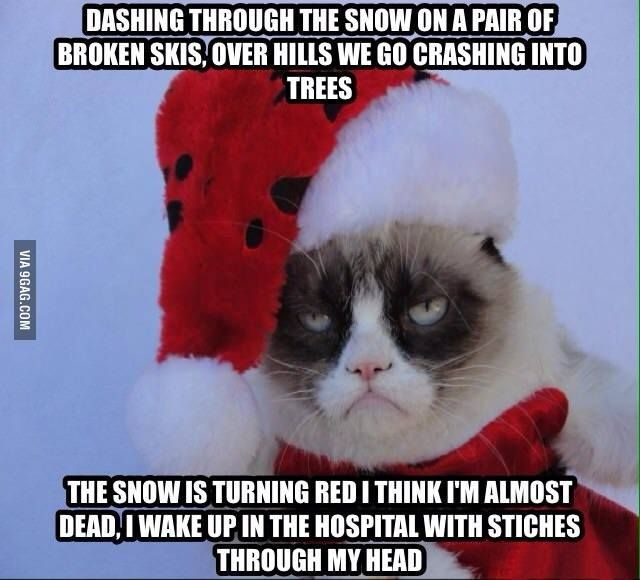 Funniest Animal Pictures Me Merry Christmas Grumpy Cat