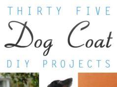09098e122c4f DIY Pets : Heat stroke in dogs. - PetsTips.net | Leading pets and ...